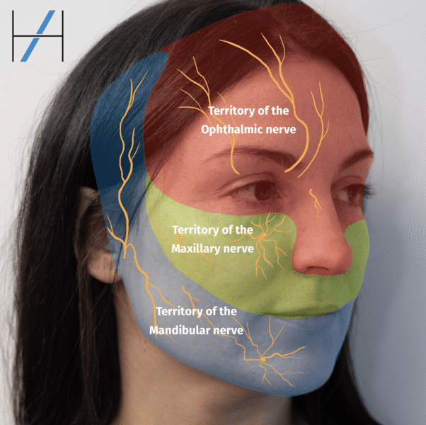 Dermal Filler Complications eLearning - Nerve Regions