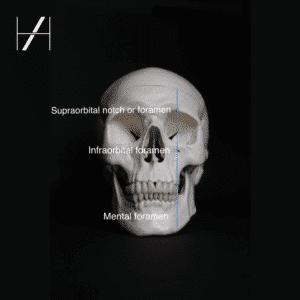 Skull Foramina